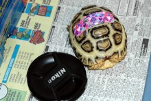 Band-Aid-Turtle-Marker