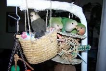 Basket-Bird-Foraging-Toy