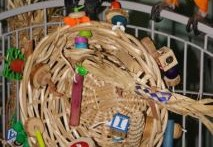 Basket-Bird-Toy