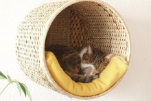Basket-Cat-Wall-Lounge