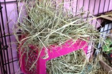 Basket-Rabbit-Hay-Rack
