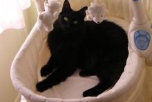 Bassinet-Cat-Bed
