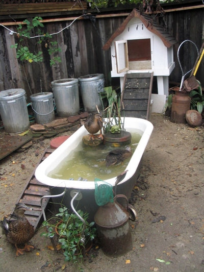 Diy bath tub duck pool for Duck shelter designs