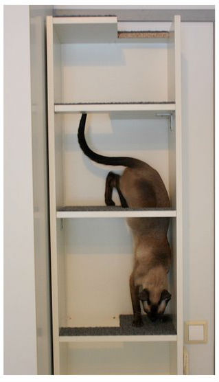 Bookcase cat tree for Bookshelf cat tower
