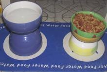 Bowl-Raised-Food-Dish