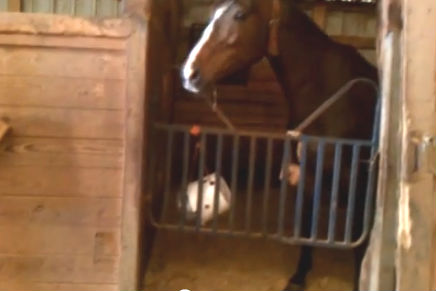 Bucket horse treat dispenser for How to treat barn wood for bugs
