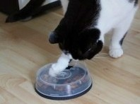 CD-Spindle-Case-Cat-Toy