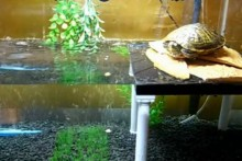 Cake-Pillar-Turtle-Platform