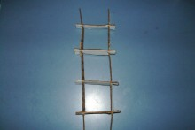 Cardboard-Bird-Ladder