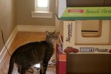 Cardboard-Box-Cat-Condo