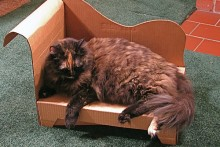 Cardboard-Cat-Chaise