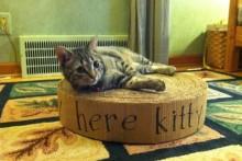 Cardboard-Cat-Ottoman