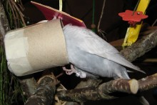 Cardboard-Roll-Bird-Foraging