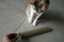 Cardboard-Roll-Cat-Toy