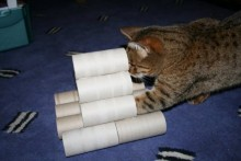Cardboard-Roll-Tower-Cat-Toy