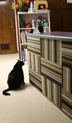 Carpet Tile Cat Wall