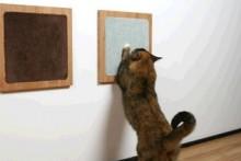 Carpet-Wood-Cat-Wall-Scratchers1