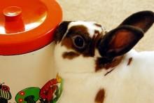 Carrot-Parsley-Rabbit-Treats