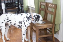 Chair-Dog-Bowl-Stand1
