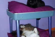 Chair-Suitcase-Cat-Bunk-Bed