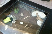 Coffee-Table-Tortoise-Terrarium