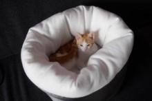 Comforter-Cat-Bed