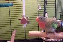 Cork-Bird-Foraging-Toy