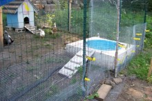 DIY-Above-Ground-Duck-Pool
