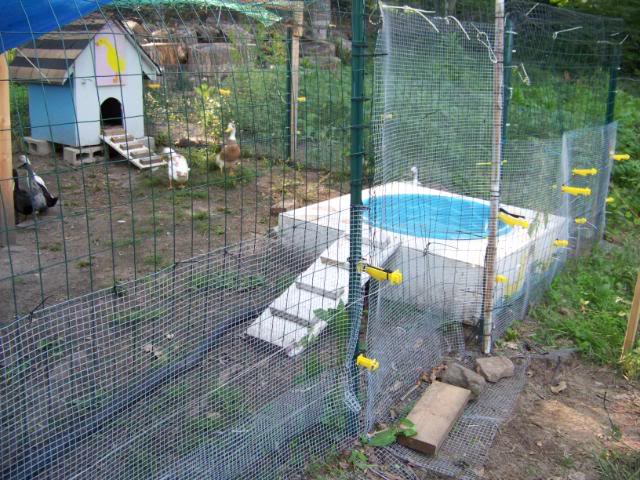 Diy Above Ground Duck Pool