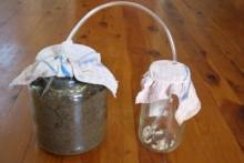 DIY-Ant-Farm-Feeder-Jar