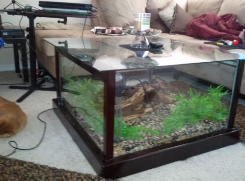 DIY Aquarium Coffee Table petdiyscom