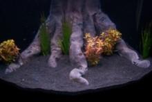 DIY-Aquarium-Decor
