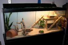 DIY-Bamboo-Dragon-Ramp