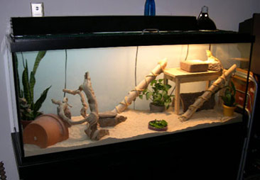 Diy Bamboo Dragon Ramp Petdiys Com