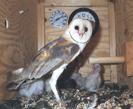 how to make an owl nesting box
