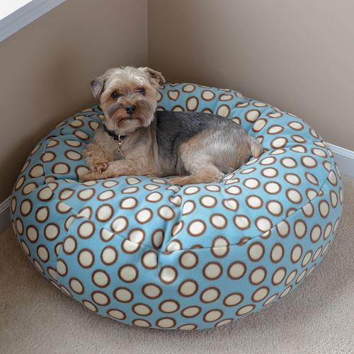 Enjoyable Dog Bean Bed Goldenacresdogs Com Evergreenethics Interior Chair Design Evergreenethicsorg