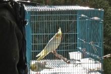 DIY-Bird-Cage-Backpack2