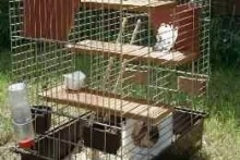 DIY-Bird-Cage-Rat-Modifications