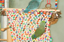 DIY-Bird-Climbing-Net