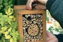 DIY-Bug-Box