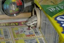 DIY-Cardboard-Snake-Hide