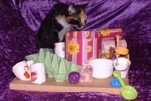 DIY-Cat-Activity-Board