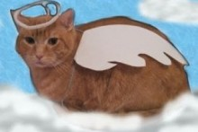 DIY-Cat-Angel-Costume1