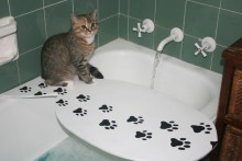 DIY-Cat-Bath-Table