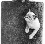 DIY-Cat-Condo