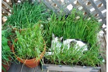 DIY-Cat-Grass-Nest