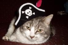 DIY-Cat-Pirate-Hat