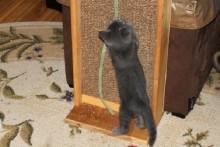 DIY-Cat-Scratch-Stand