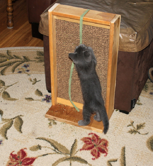 Diy cat scratch stand for How to make a cat toy out of a box
