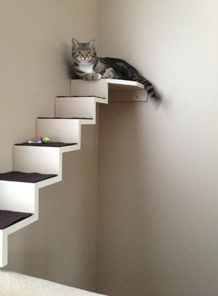 diy cat staircase wall. Black Bedroom Furniture Sets. Home Design Ideas